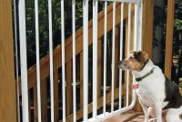 Pet Gates Stairway Special Outdoor Wall Mounting Gate At Drs pertaining to dimensions 1000 X 1000