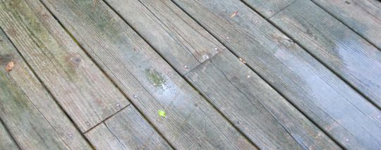 Permalink to Black Mold On Deck Boards